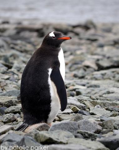 Antarctica by Natalie Parker 11