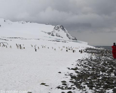 Antarctica by Natalie Parker 12