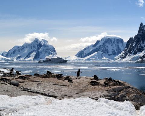 Antarctica by Natalie Parker 5