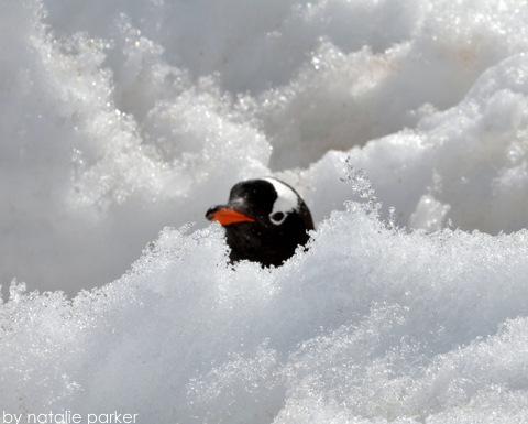 Antarctica by Natalie Parker 7