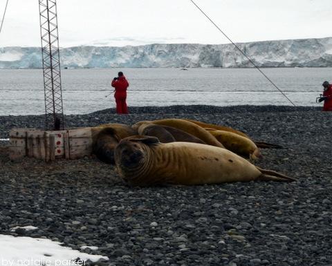 Antarctica by Natalie Parker 9