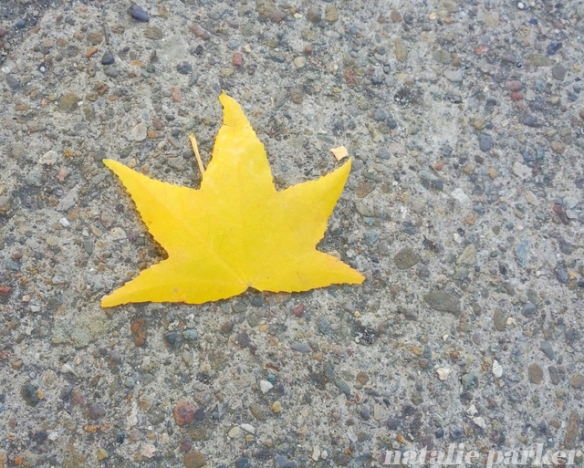 Fall Leaf on Sidewalk by Natalie Parker
