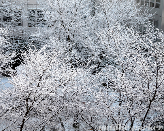 Snowy Trees in Munich by Natalie Parker