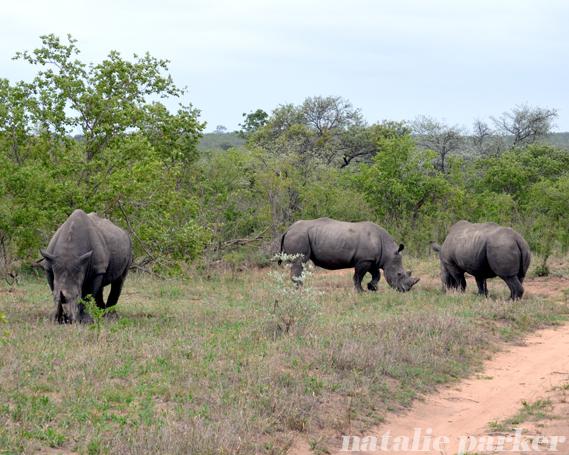 Wihte Rhinos by Natalie Parker